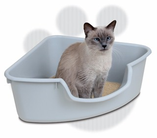 cat-ve-sinh-cho-meo