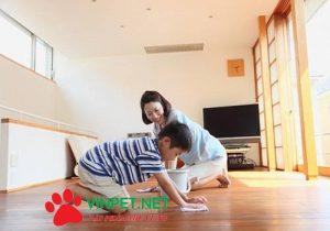 Hướng dẫn Cách Khử sạch mùi nước tiểu chó mèo
