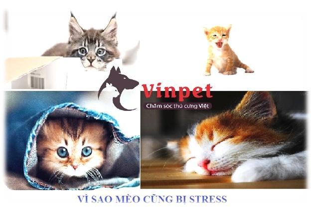 VI SAO MEO CUNG BI STRESS