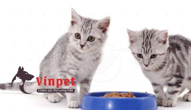 thức ăn cho mèo con Kucin-g-2-758x438